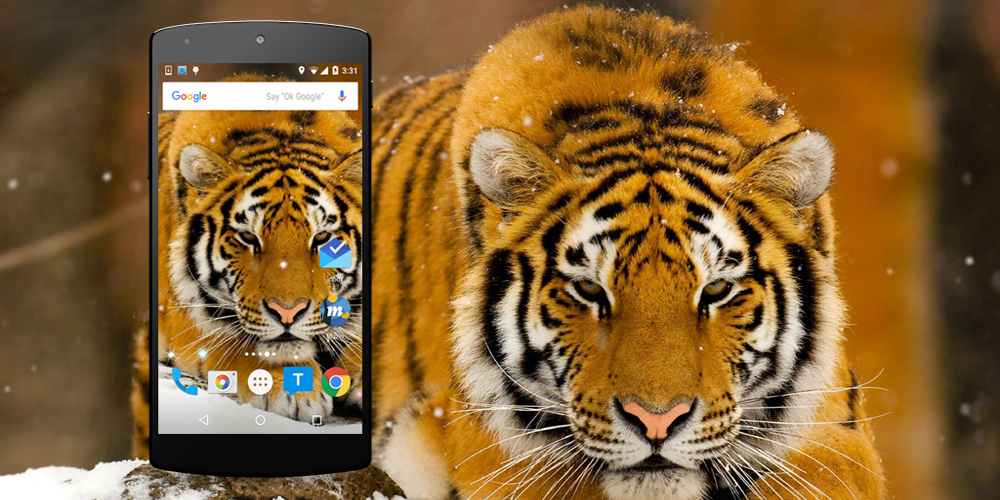 tiger live wallpaper download apk for android aptoide