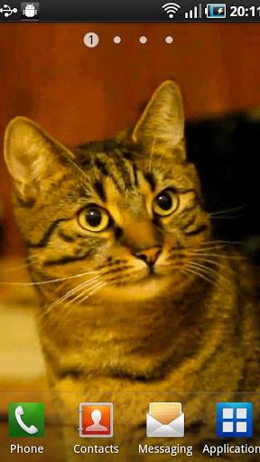 Talking Cat Screenshot