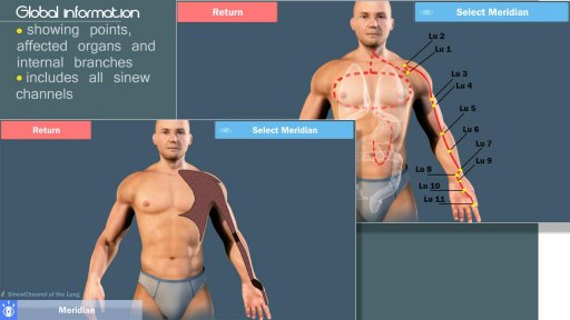 3D Acupuncture&meridians;(Full) screenshot 4